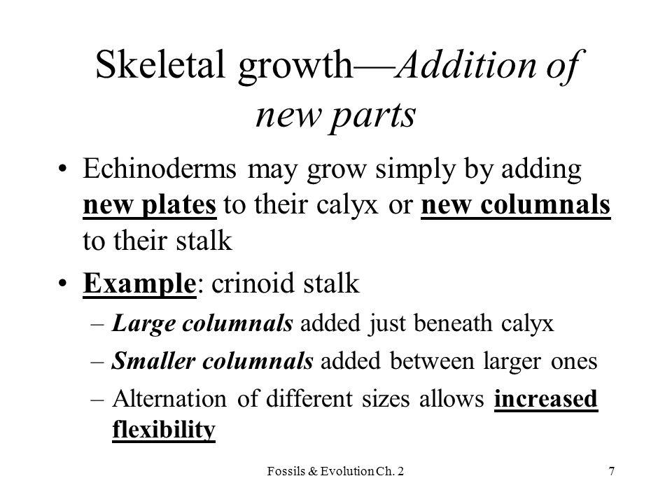 Fossils & Evolution Ch. 28 Crinoid stalk (addition)