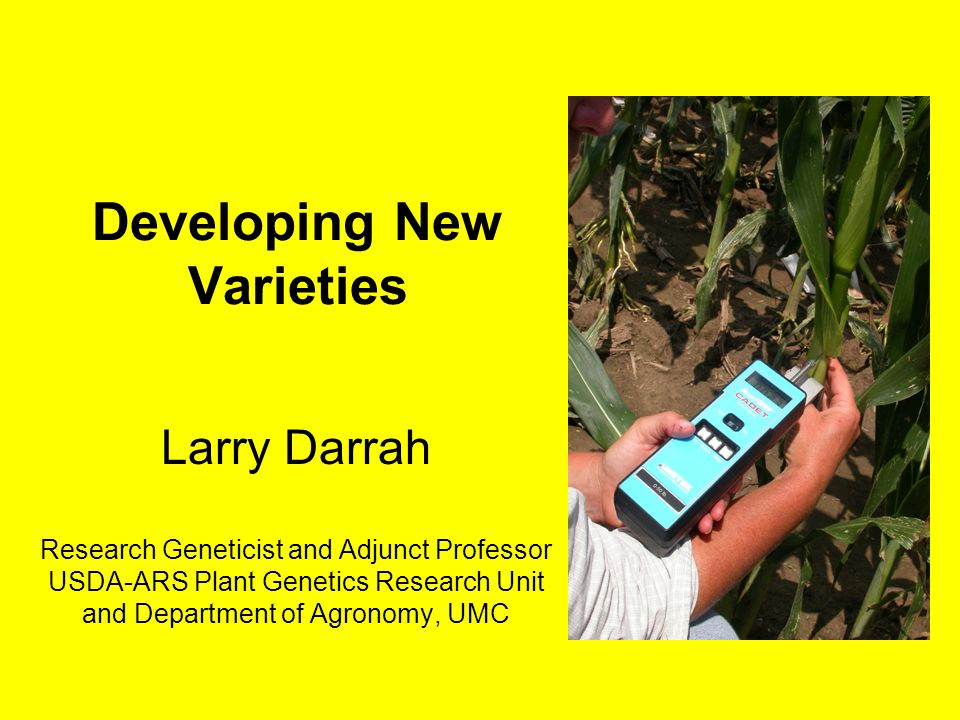 Developing New Varieties Larry Darrah Research Geneticist and Adjunct Professor USDA-ARS Plant Genetics Research Unit and Department of Agronomy, UMC
