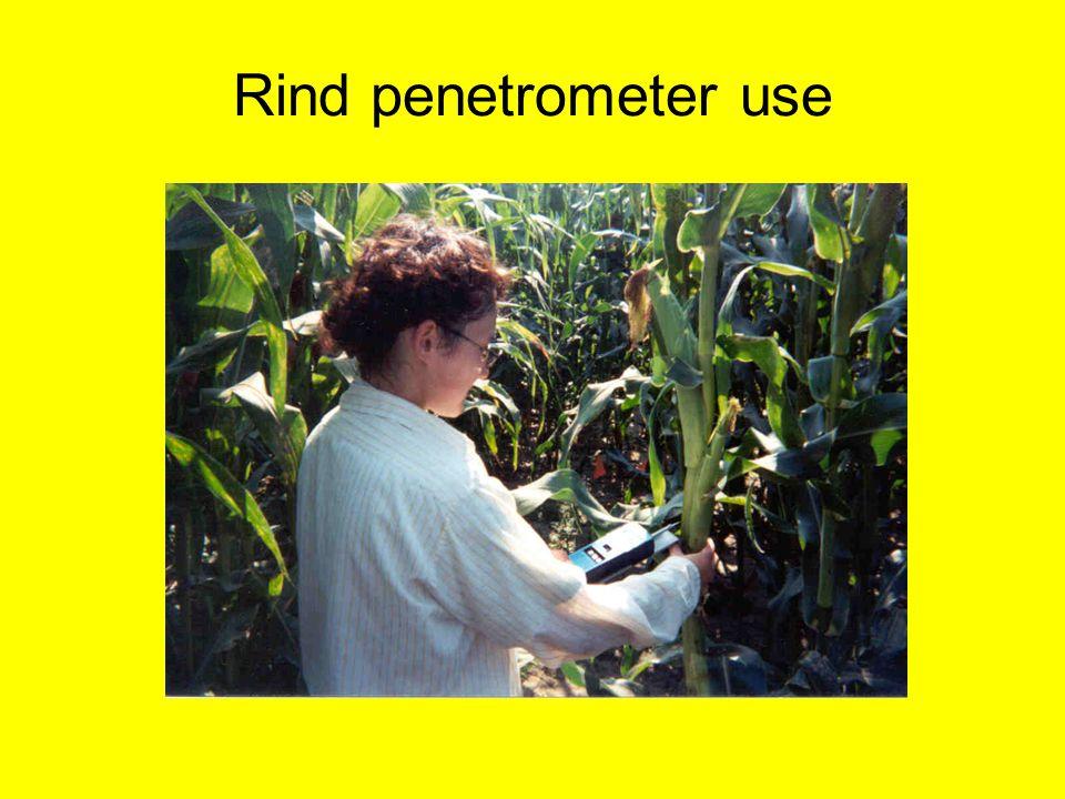 Rind penetrometer use