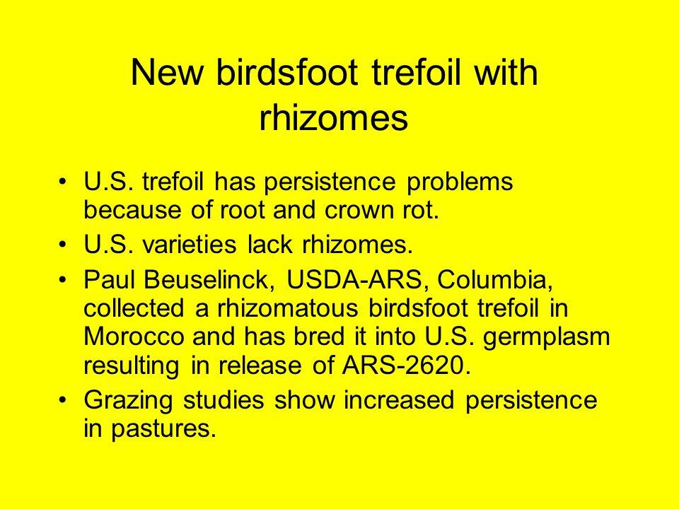 New birdsfoot trefoil with rhizomes U.S.