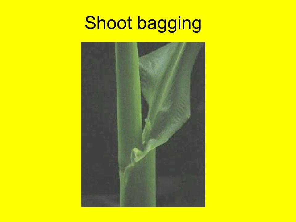Shoot bagging