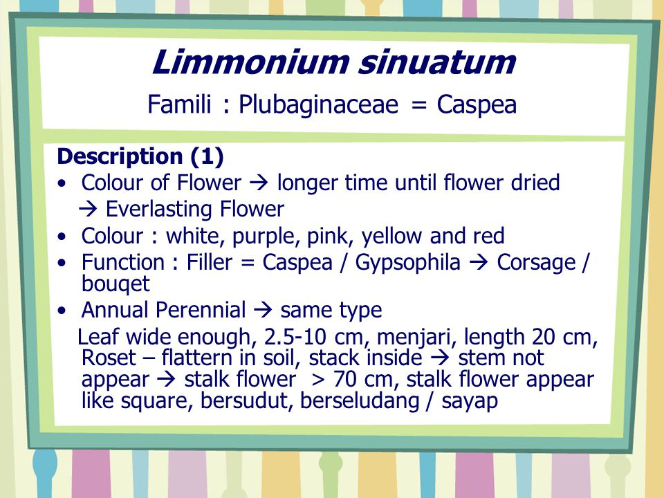 Limmonium sinuatum Famili : Plubaginaceae = Caspea Description (1) Colour of Flower  longer time until flower dried  Everlasting Flower Colour : white, purple, pink, yellow and red Function : Filler = Caspea / Gypsophila  Corsage / bouqet Annual Perennial  same type Leaf wide enough, 2.5-10 cm, menjari, length 20 cm, Roset – flattern in soil, stack inside  stem not appear  stalk flower > 70 cm, stalk flower appear like square, bersudut, berseludang / sayap