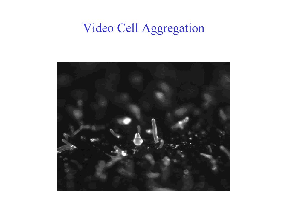Video Cell Aggregation