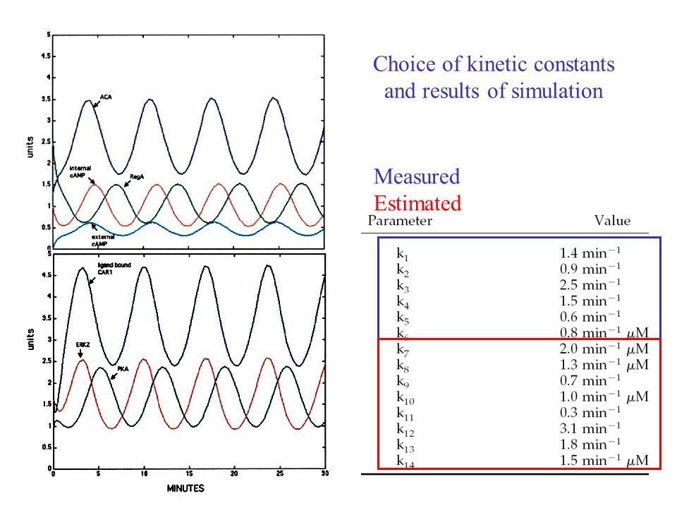 Choice of kinetic constants and results of simulation Measured Estimated