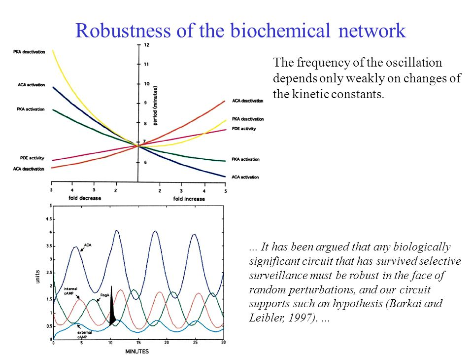 Robustness of the biochemical network The frequency of the oscillation depends only weakly on changes of the kinetic constants....