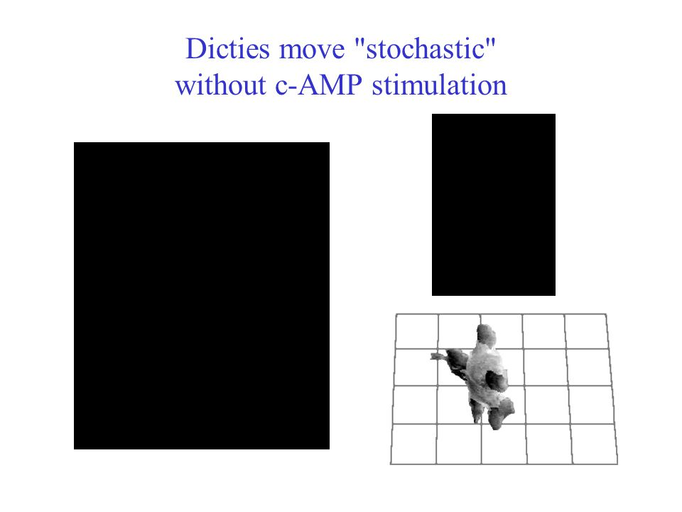 Dicties move stochastic without c-AMP stimulation
