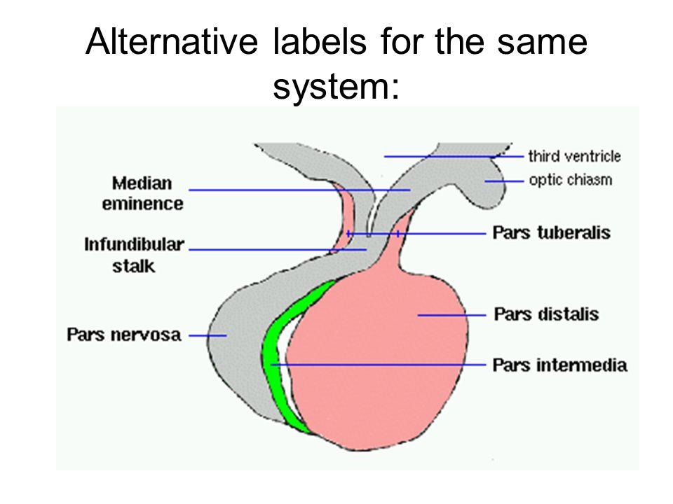 Alternative labels for the same system: