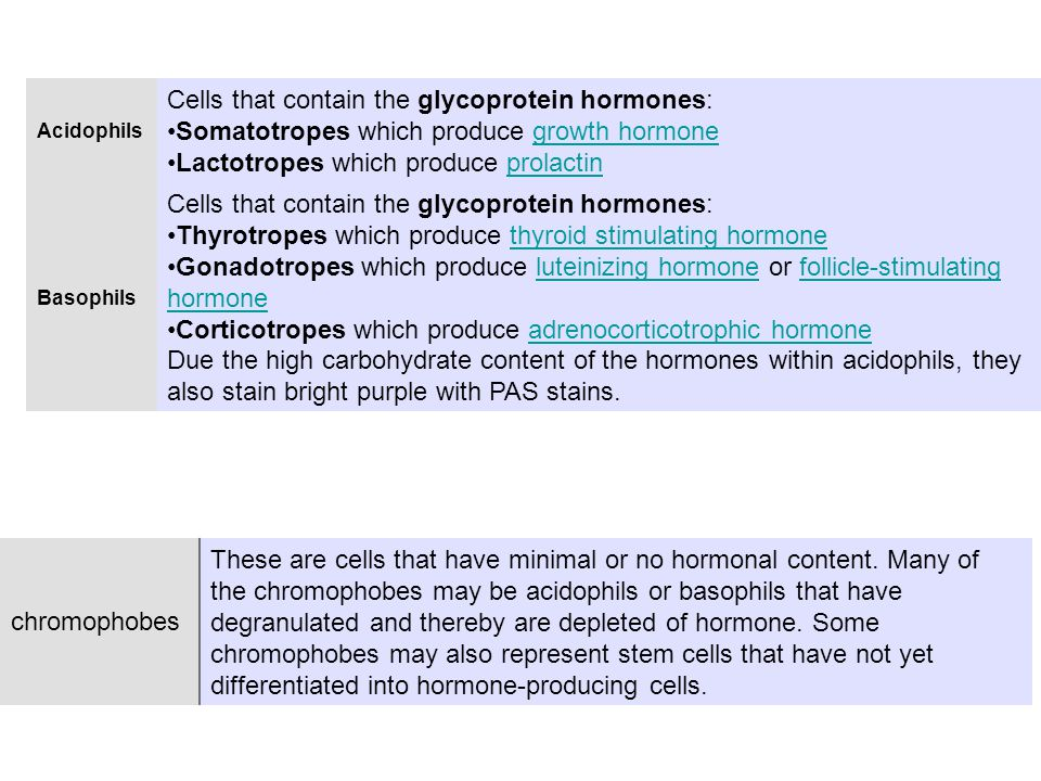 Acidophils Cells that contain the glycoprotein hormones: Somatotropes which produce growth hormonegrowth hormone Lactotropes which produce prolactinprolactin Basophils Cells that contain the glycoprotein hormones: Thyrotropes which produce thyroid stimulating hormonethyroid stimulating hormone Gonadotropes which produce luteinizing hormone or follicle-stimulating hormoneluteinizing hormonefollicle-stimulating hormone Corticotropes which produce adrenocorticotrophic hormoneadrenocorticotrophic hormone Due the high carbohydrate content of the hormones within acidophils, they also stain bright purple with PAS stains.