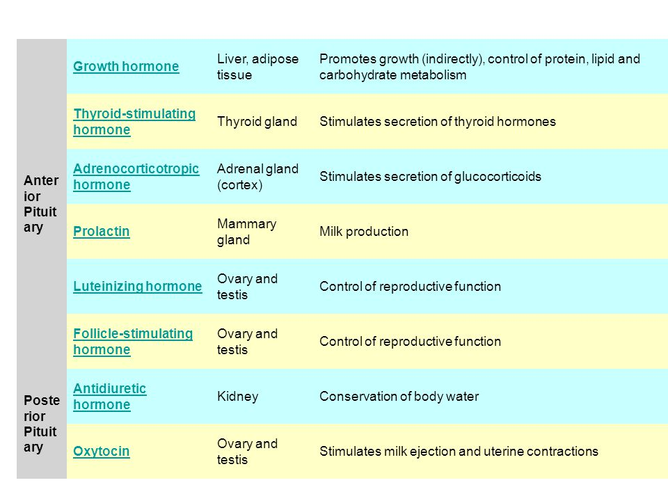 Anter ior Pituit ary Growth hormone Liver, adipose tissue Promotes growth (indirectly), control of protein, lipid and carbohydrate metabolism Thyroid-stimulating hormone Thyroid glandStimulates secretion of thyroid hormones Adrenocorticotropic hormone Adrenal gland (cortex) Stimulates secretion of glucocorticoids Prolactin Mammary gland Milk production Luteinizing hormone Ovary and testis Control of reproductive function Follicle-stimulating hormone Ovary and testis Control of reproductive function Poste rior Pituit ary Antidiuretic hormone KidneyConservation of body water Oxytocin Ovary and testis Stimulates milk ejection and uterine contractions