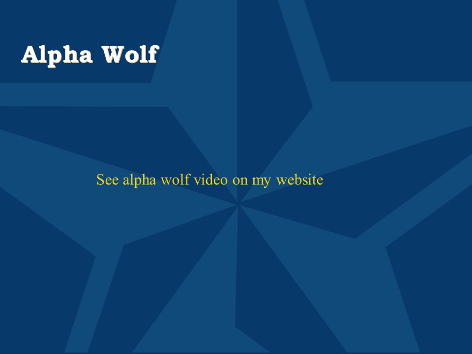 Alpha Wolf See alpha wolf video on my website