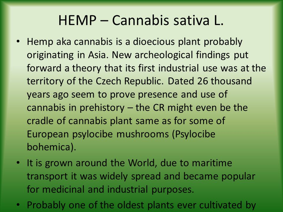 HEMP – Cannabis sativa L. Hemp aka cannabis is a dioecious plant probably originating in Asia.