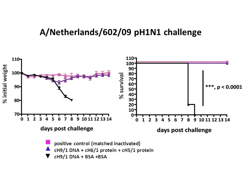A/Netherlands/602/09 pH1N1 challenge positive control (matched inactivated) cH9/1 DNA + cH6/1 protein + cH5/1 protein cH9/1 DNA + BSA +BSA