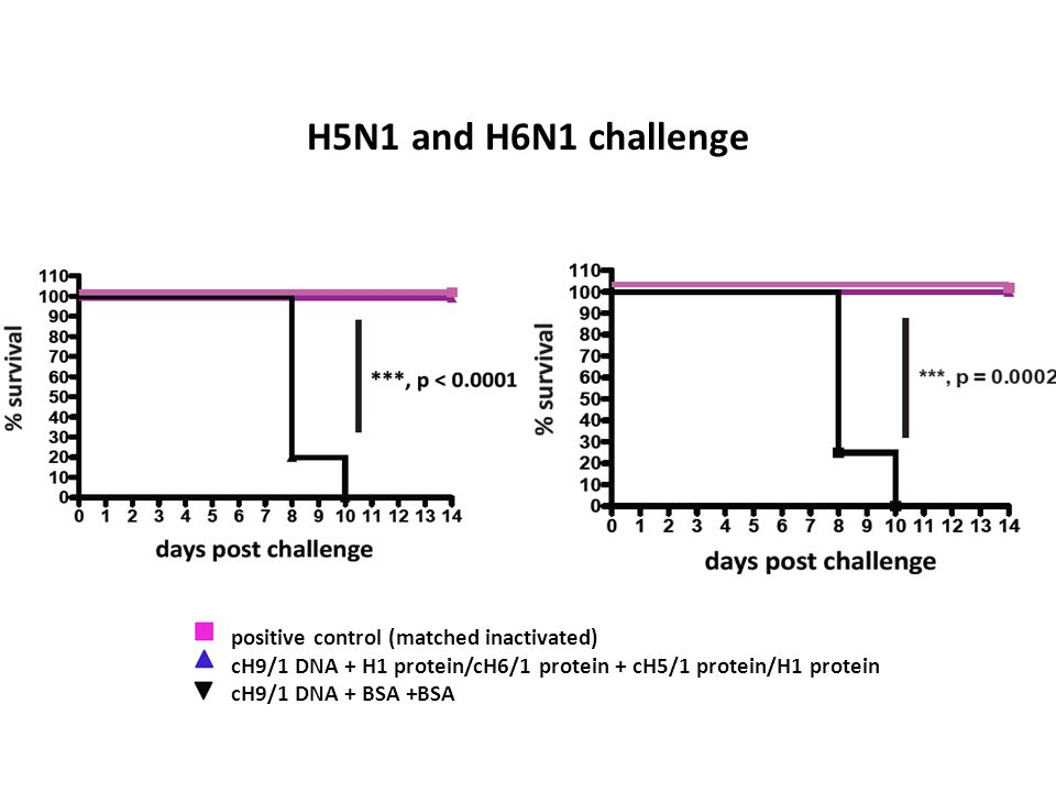 H5N1 and H6N1 challenge positive control (matched inactivated) cH9/1 DNA + H1 protein/cH6/1 protein + cH5/1 protein/H1 protein cH9/1 DNA + BSA +BSA