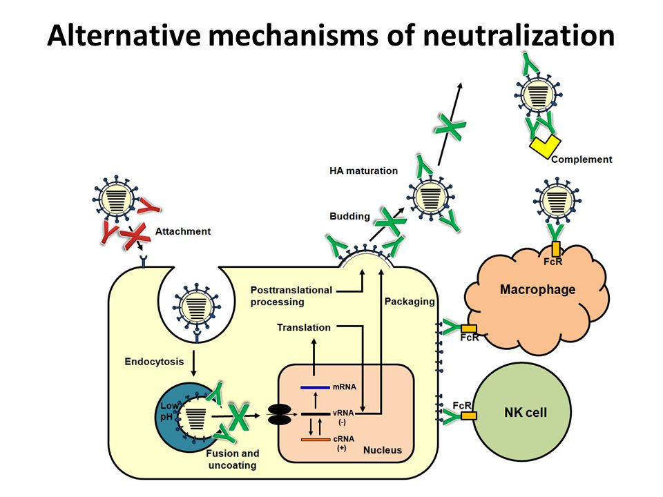 Alternative mechanisms of neutralization