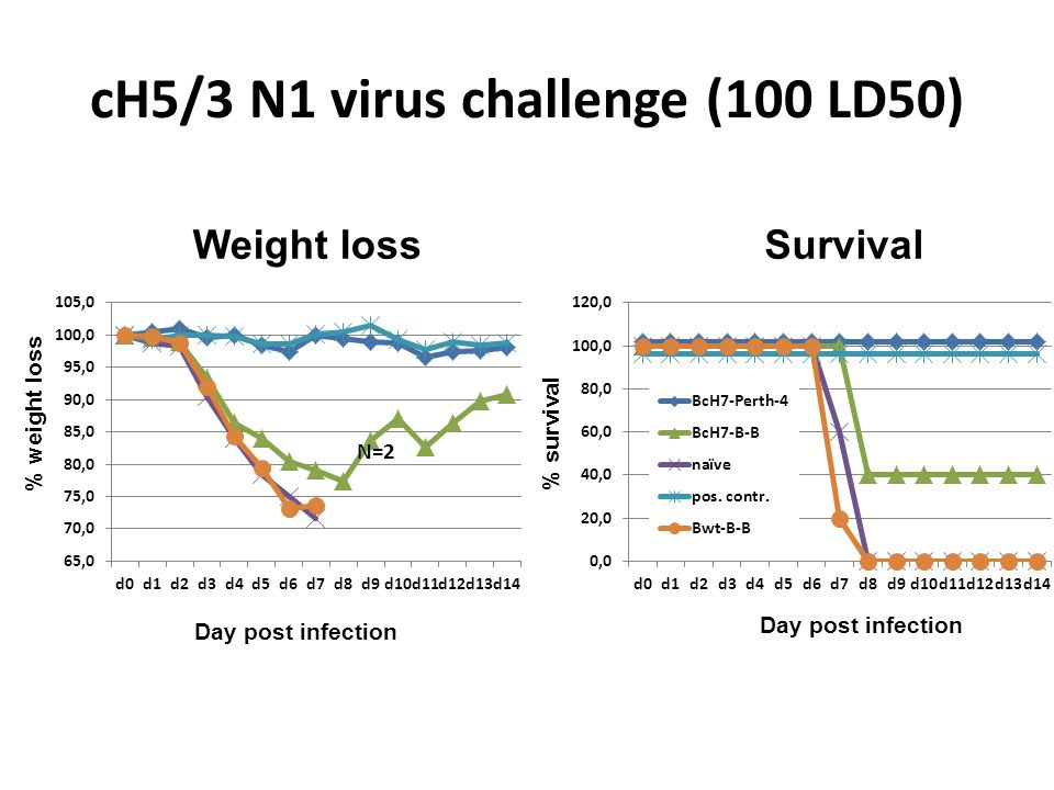 cH5/3 N1 virus challenge (100 LD50) Day post infection % weight loss % survival Weight lossSurvival