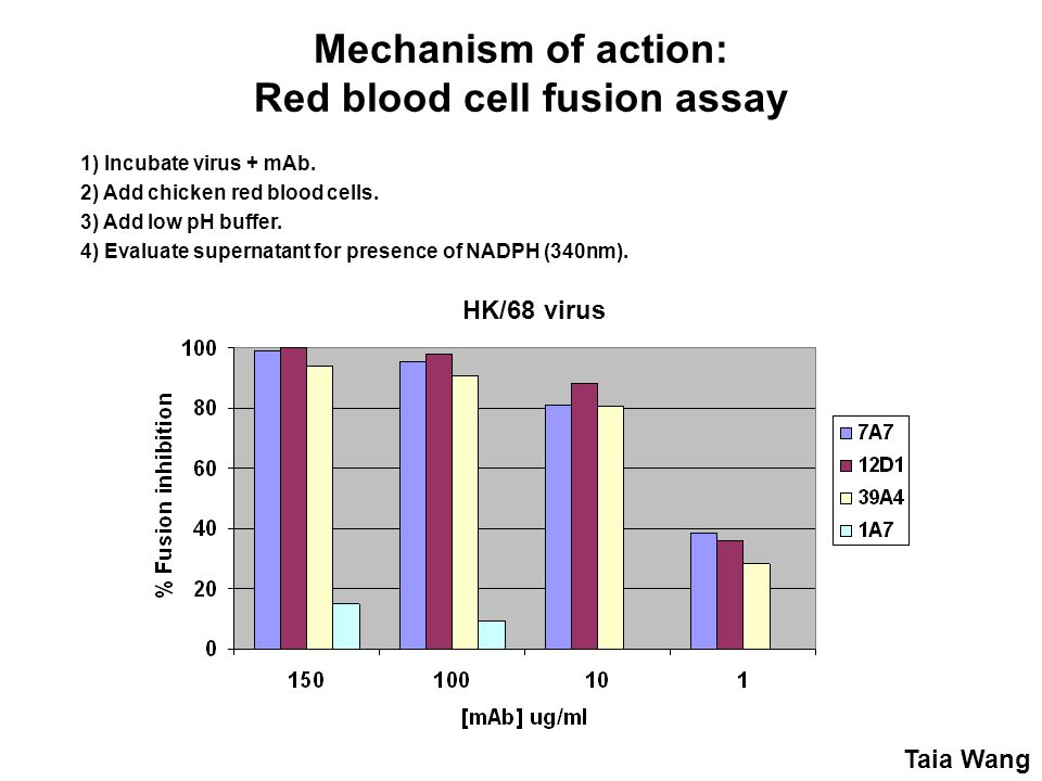 Mechanism of action: Red blood cell fusion assay 1) Incubate virus + mAb.