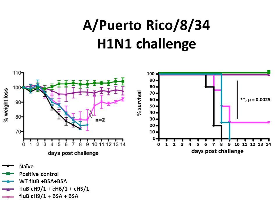 A/Puerto Rico/8/34 H1N1 challenge Naïve Positive control WT fluB +BSA+BSA fluB cH9/1 + cH6/1 + cH5/1 fluB cH9/1 + BSA + BSA