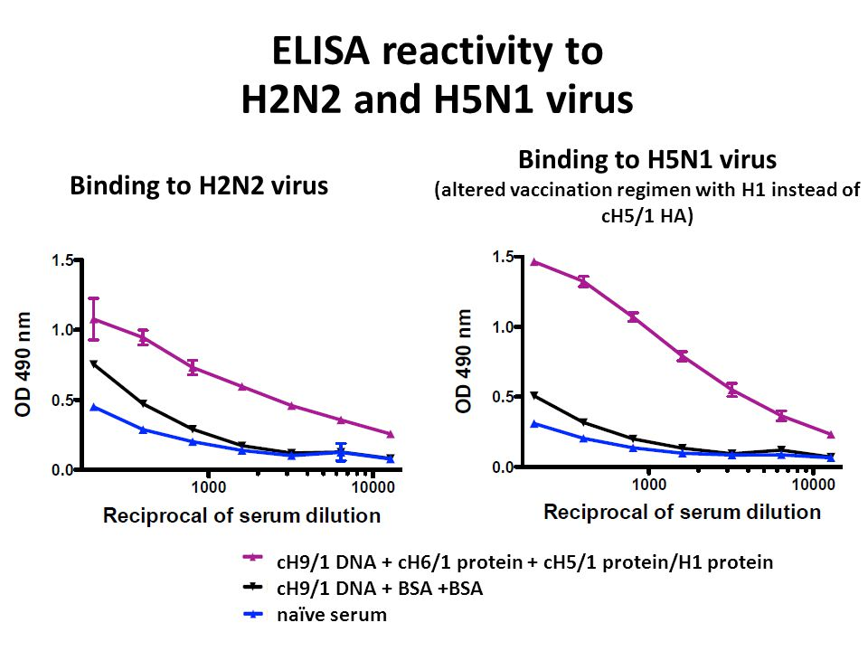 Binding to H2N2 virus Binding to H5N1 virus (altered vaccination regimen with H1 instead of cH5/1 HA) ELISA reactivity to H2N2 and H5N1 virus cH9/1 DNA + cH6/1 protein + cH5/1 protein/H1 protein cH9/1 DNA + BSA +BSA naïve serum