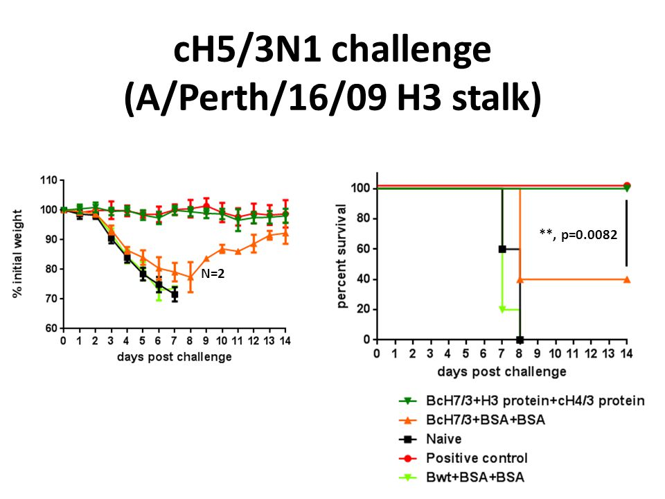 cH5/3N1 challenge (A/Perth/16/09 H3 stalk) **, p=0.0082 N=2