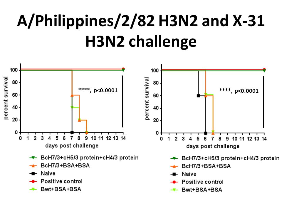 A/Philippines/2/82 H3N2 and X-31 H3N2 challenge ****, p<0.0001