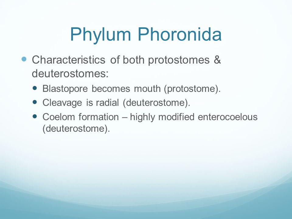 Phylum Nemertea Ribbon worms, phylum Nemertea, use a proboscis to capture prey.