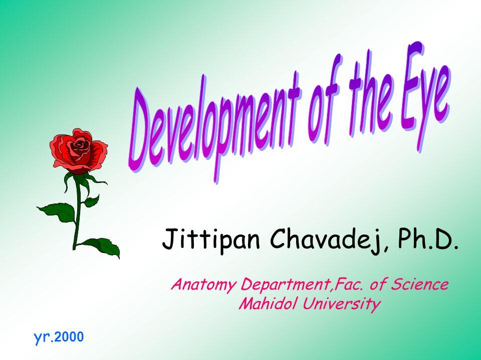 Jittipan Chavadej, Ph.D. Anatomy Department,Fac. of Science Mahidol University yr. 2000