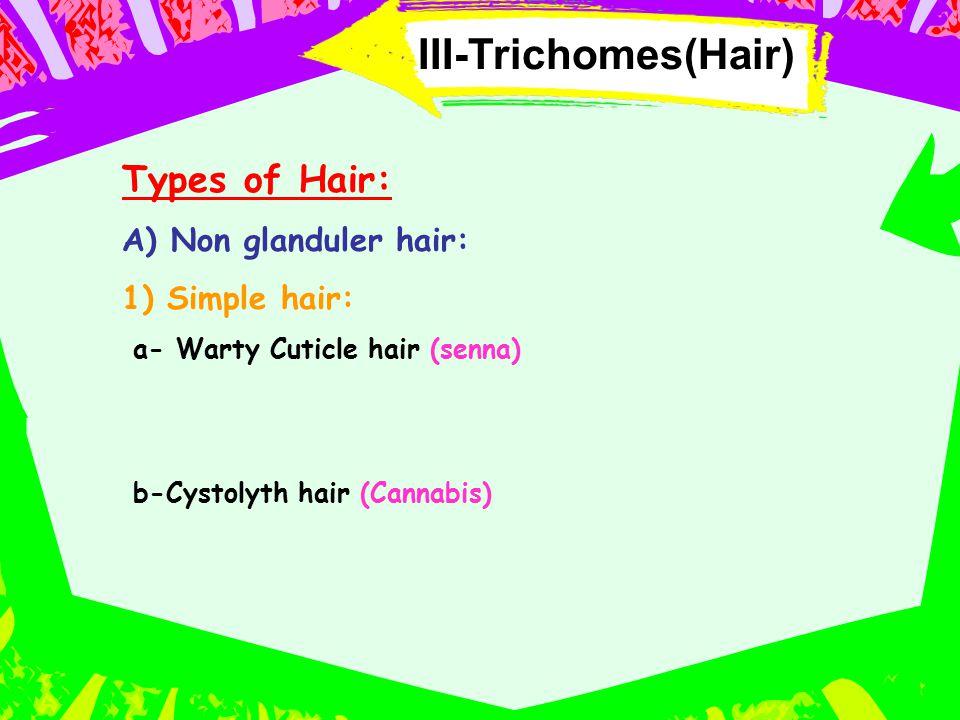 III-Trichomes(Hair) Types of Hair: A) Non glanduler hair: 1) Simple hair: a- Warty Cuticle hair (senna) b-Cystolyth hair (Cannabis)