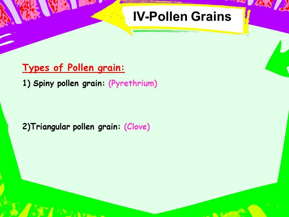 IV-Pollen Grains Types of Pollen grain: 1)Spiny pollen grain: (Pyrethrium) 2)Triangular pollen grain: (Clove)
