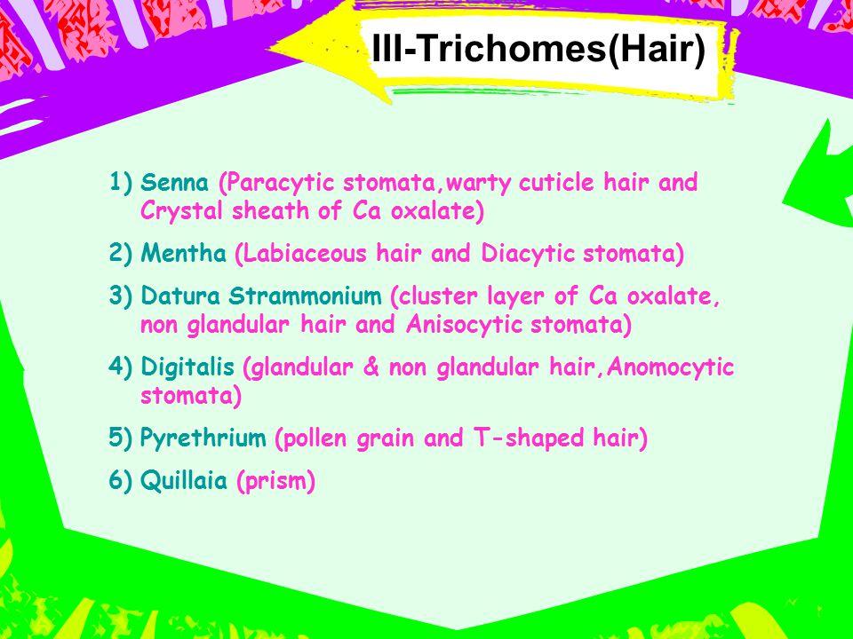 III-Trichomes(Hair) 1)Senna (Paracytic stomata,warty cuticle hair and Crystal sheath of Ca oxalate) 2)Mentha (Labiaceous hair and Diacytic stomata) 3)
