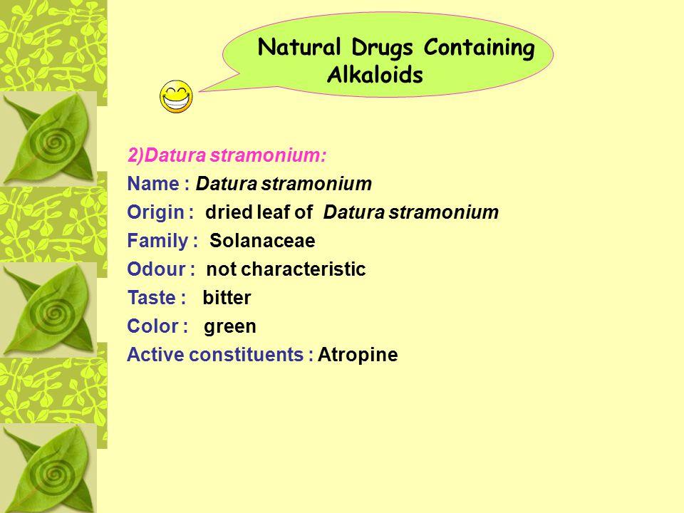 Natural Drugs Containing Alkaloids 2)Datura stramonium: Name : Datura stramonium Origin : dried leaf of Datura stramonium Family : Solanaceae Odour :