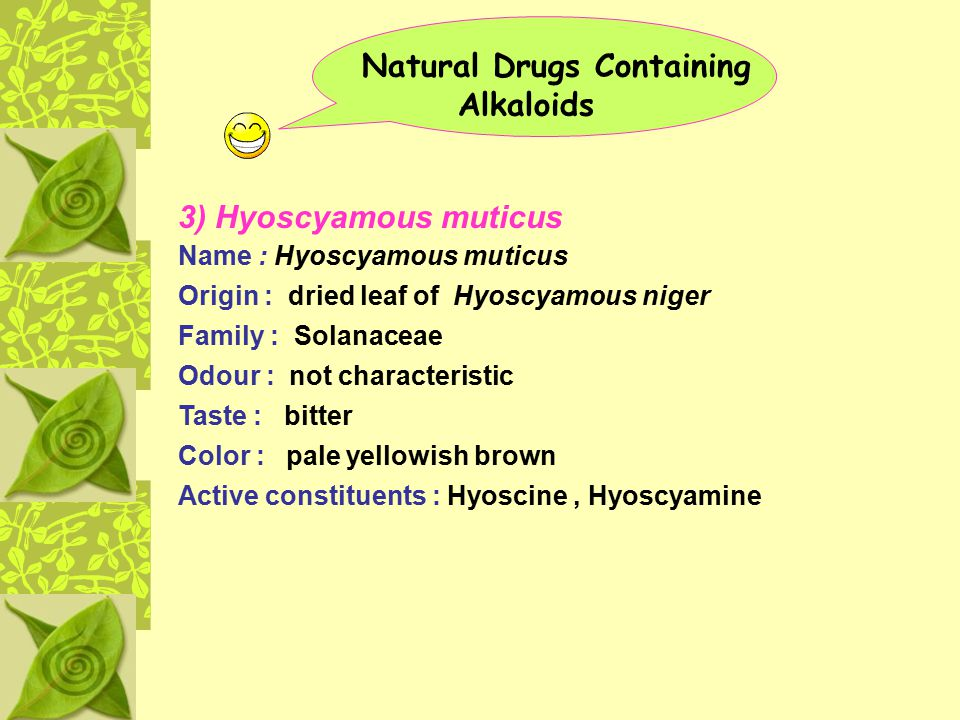 Natural Drugs Containing Alkaloids 3) Hyoscyamous muticus Name : Hyoscyamous muticus Origin : dried leaf of Hyoscyamous niger Family : Solanaceae Odou