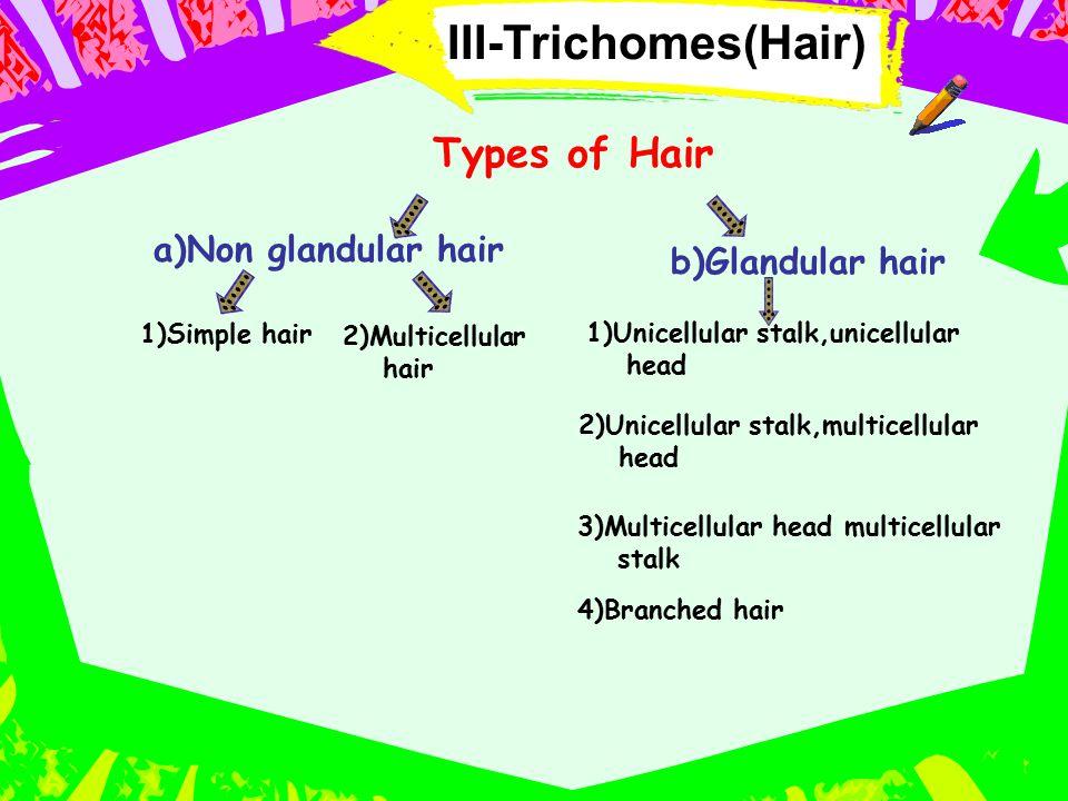 III-Trichomes(Hair) Types of Hair a)Non glandular hair 1)Simple hair 2)Multicellular hair b)Glandular hair 1)Unicellular stalk,unicellular head 2)Unic