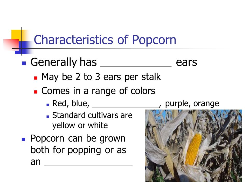 Characteristics of Popcorn Generally has ________________ ears May be 2 to 3 ears per stalk Comes in a range of colors Red, blue, _______________, purple, orange Standard cultivars are yellow or white Popcorn can be grown both for popping or as an _________________