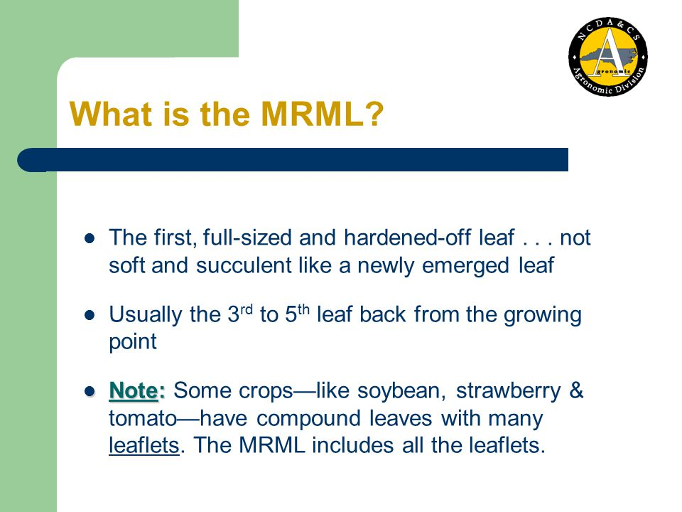 Selecting the MRML Tomato MRML 5 th entire leaf from the plant's growing point Illustration by K.