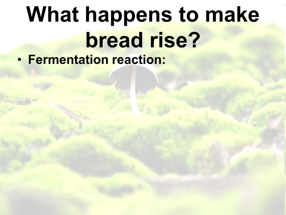 What happens to make bread rise Fermentation reaction: