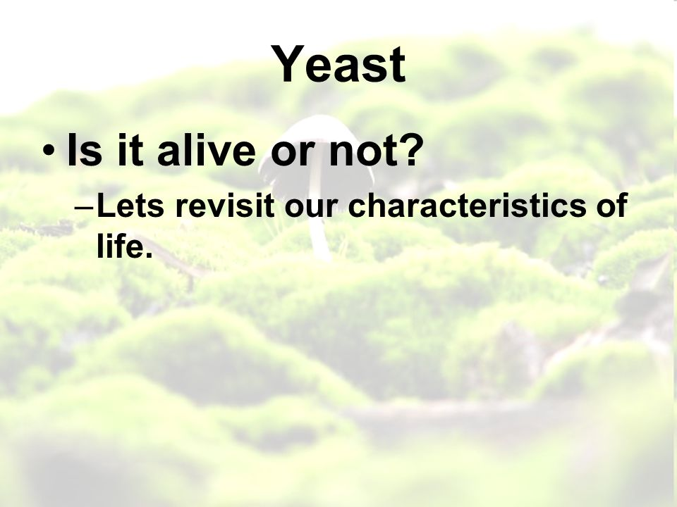 Yeast Is it alive or not –Lets revisit our characteristics of life.