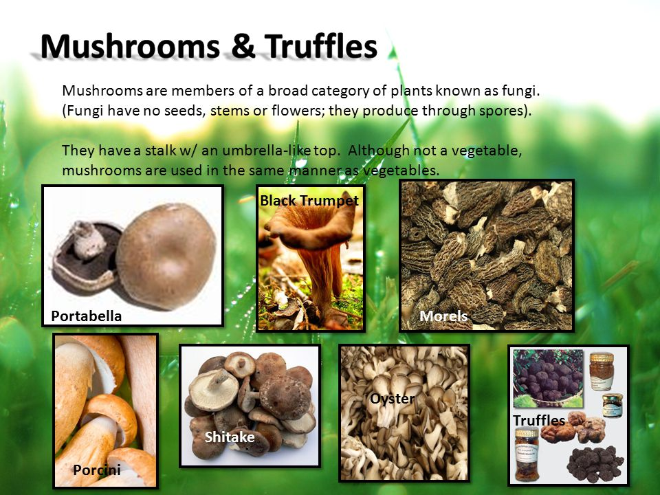 Mushrooms are members of a broad category of plants known as fungi. (Fungi have no seeds, stems or flowers; they produce through spores). They have a