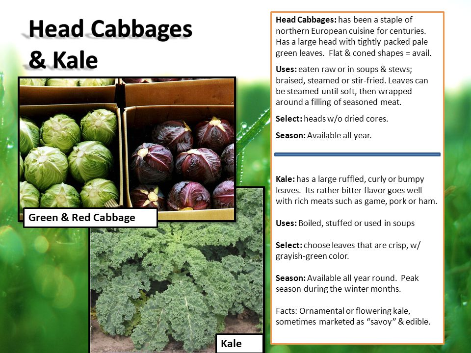 Head Cabbages: has been a staple of northern European cuisine for centuries. Has a large head with tightly packed pale green leaves. Flat & coned shap