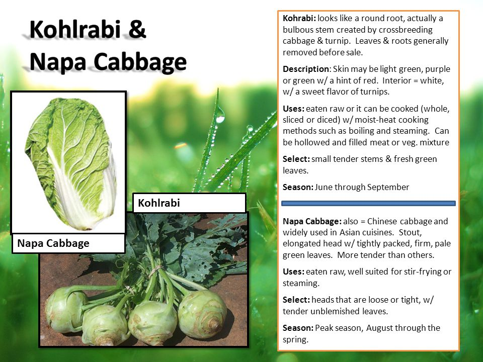 Napa Cabbage Kohlrabi Kohrabi: looks like a round root, actually a bulbous stem created by crossbreeding cabbage & turnip. Leaves & roots generally re