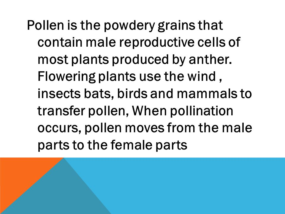 Pollen is the powdery grains that contain male reproductive cells of most plants produced by anther. Flowering plants use the wind, insects bats, bird