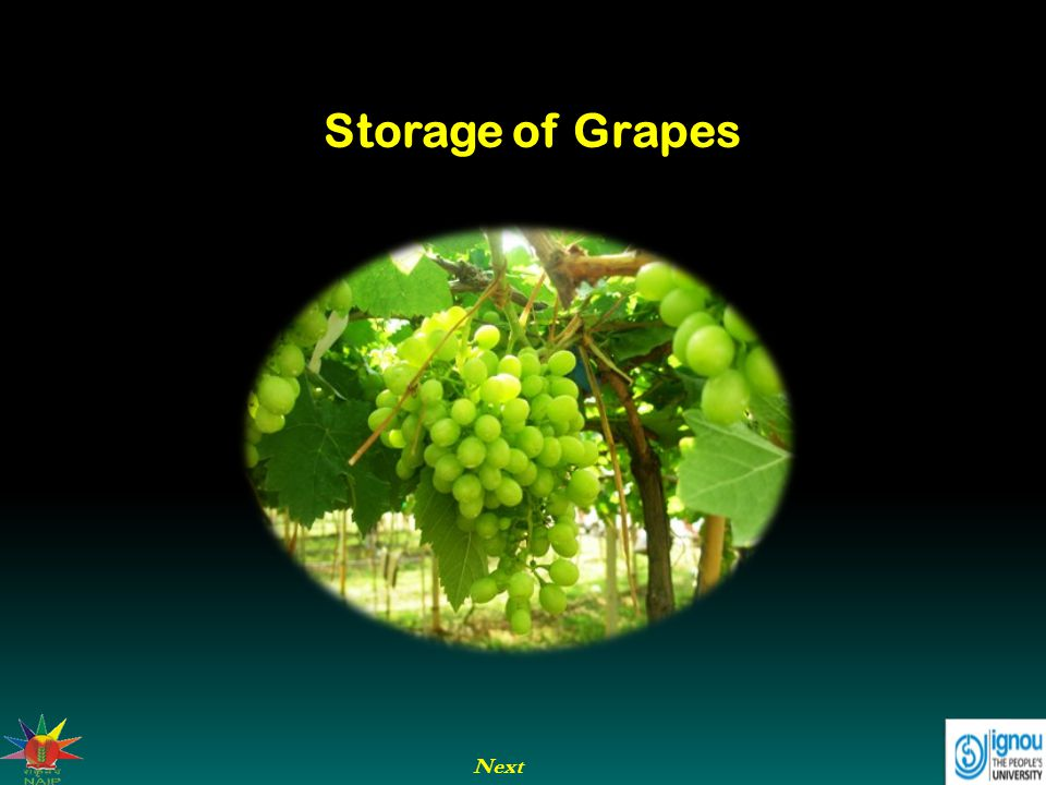 Next Storage of Grapes