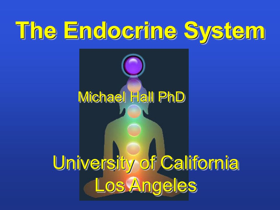 The Endocrine System Michael Hall PhD University of California Los Angeles University of California Los Angeles