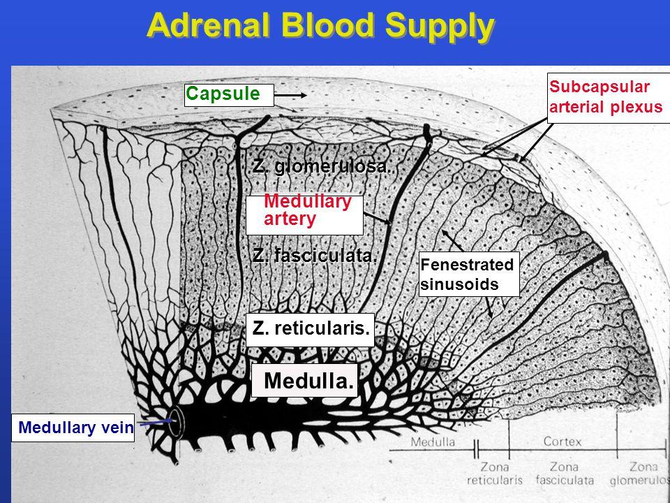 Capsule Subcapsular arterial plexus Fenestrated sinusoids Medullary artery Medullary vein Adrenal Blood Supply Z. glomerulosa. Z. fasciculata. Medulla