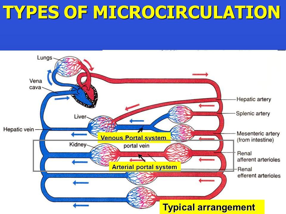 GUTLIVER TYPES OF MICROCIRCULATION Typical arrangement Venous Portal system Arterial portal system