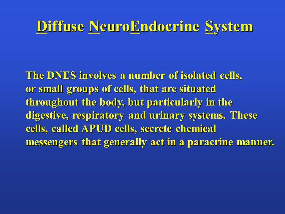 The Endocrine Glands Most organs have some endocrine function.