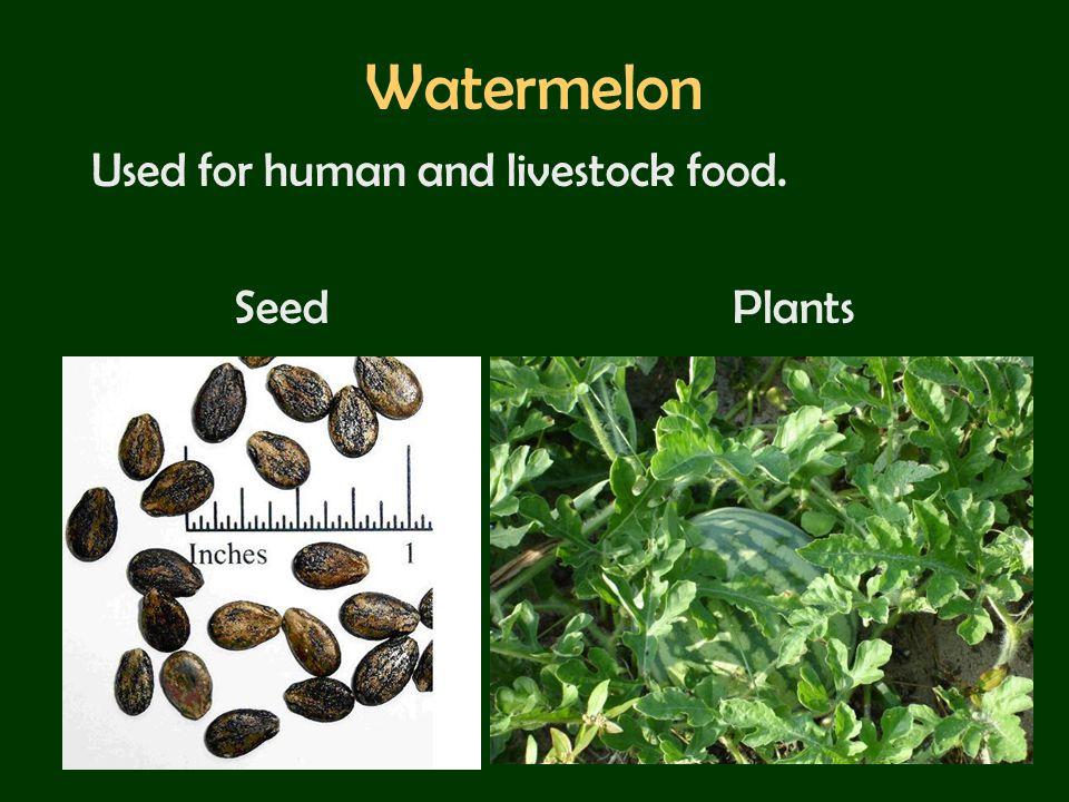 Watermelon Used for human and livestock food. SeedPlants