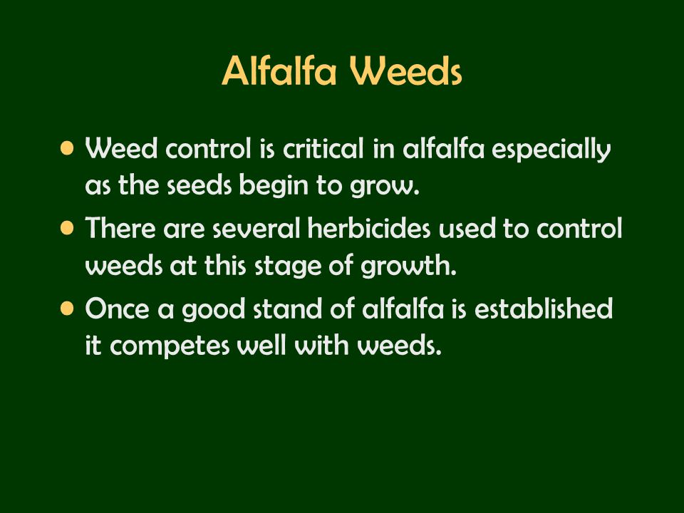 Alfalfa Weeds Weed control is critical in alfalfa especially as the seeds begin to grow. There are several herbicides used to control weeds at this st