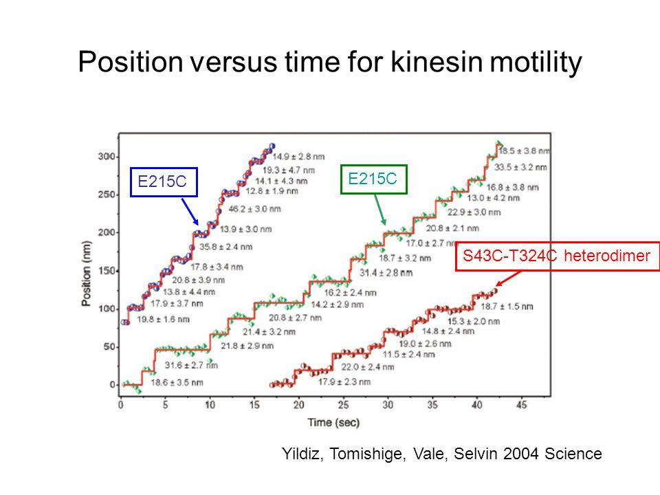 Position versus time for kinesin motility Yildiz, Tomishige, Vale, Selvin 2004 Science E215C S43C-T324C heterodimer