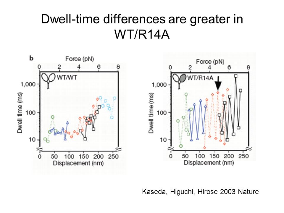 Dwell-time differences are greater in WT/R14A Kaseda, Higuchi, Hirose 2003 Nature