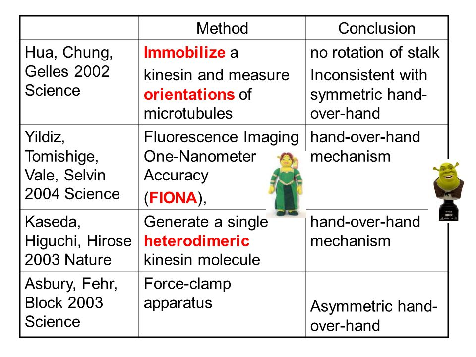 MethodConclusion Hua, Chung, Gelles 2002 Science Immobilize a kinesin and measure orientations of microtubules no rotation of stalk Inconsistent with symmetric hand- over-hand Yildiz, Tomishige, Vale, Selvin 2004 Science Fluorescence Imaging One-Nanometer Accuracy (FIONA), hand-over-hand mechanism Kaseda, Higuchi, Hirose 2003 Nature Generate a single heterodimeric kinesin molecule hand-over-hand mechanism Asbury, Fehr, Block 2003 Science Force-clamp apparatus Asymmetric hand- over-hand